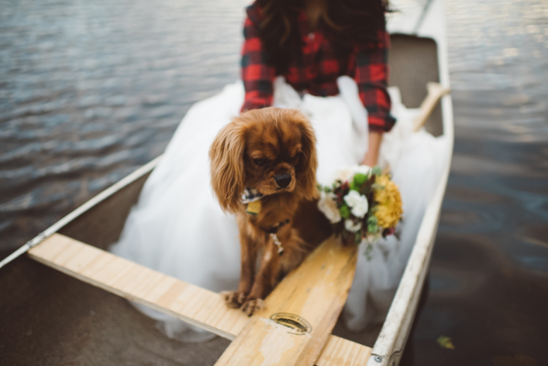 love is autumn colors and flower crowns and puppy kisses and canoes. love is first wedding anniversaries spent in the wild. love is danielle + terry.